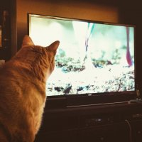 Kot ogląda telewizję